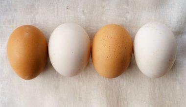Brown eggs vs